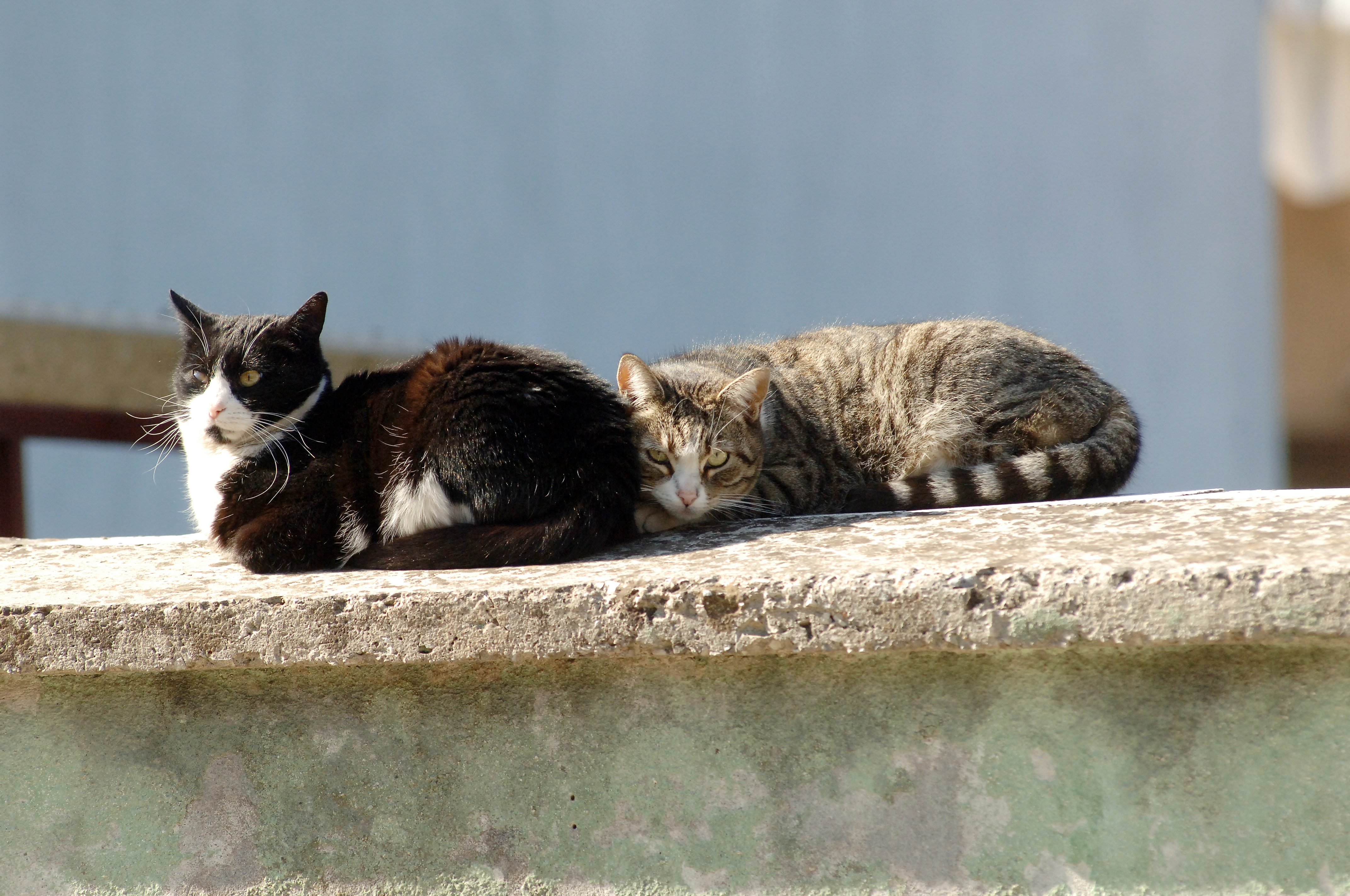 Crna maca besplatno preuzimanje