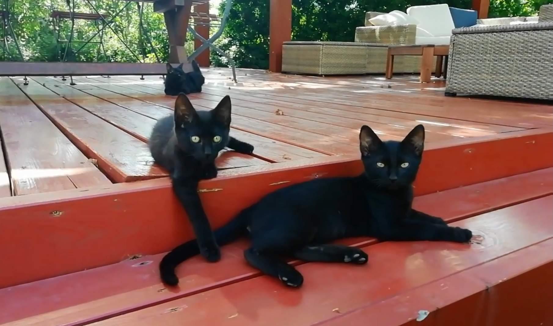 video crne mace najbolji amatuer sex video