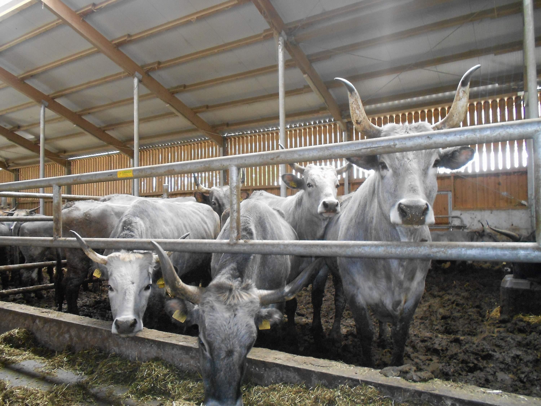 uzgajivačnica za farme na farmi